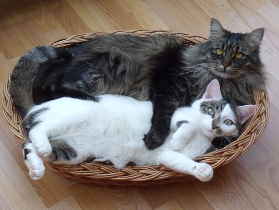 cats-in-basket