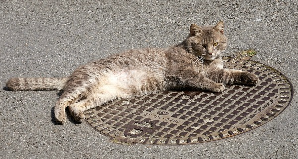 cat-census-washington-dc