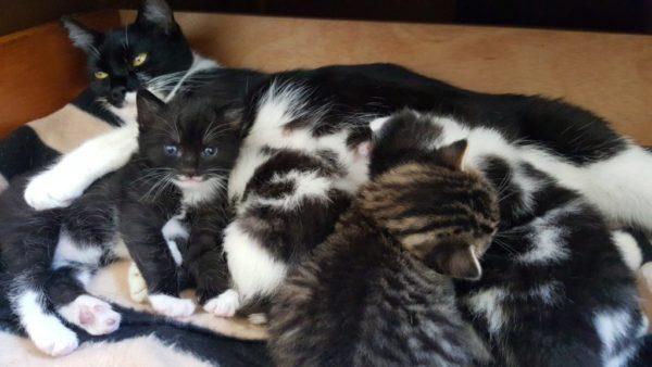 paris-zarcilla-cat-kittens