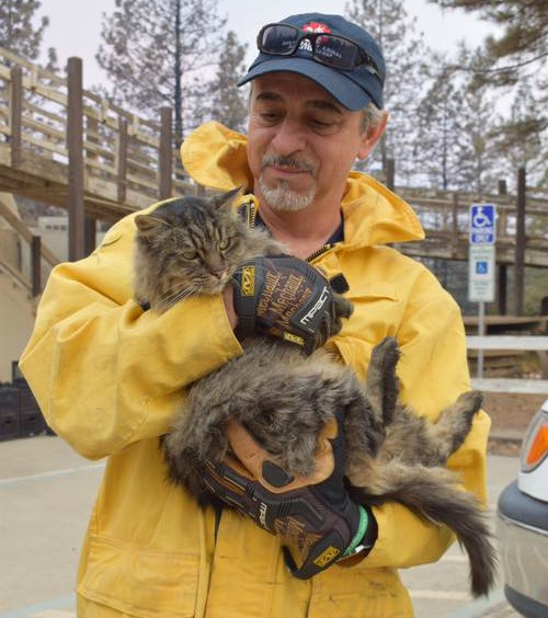 camp-fire-cat-rescue
