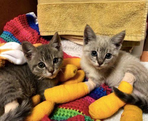 kittens-camp-fire