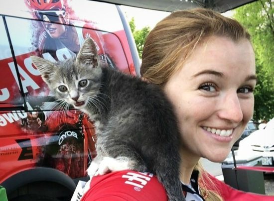 kitten-bicycle