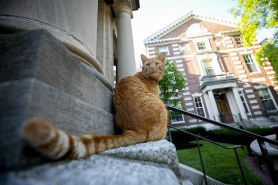 Remy-harvard-cat