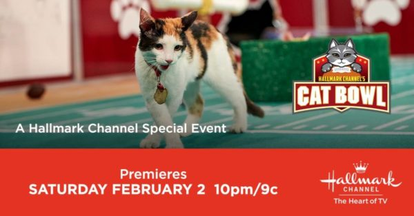 hallmark-channel-cat-bowl