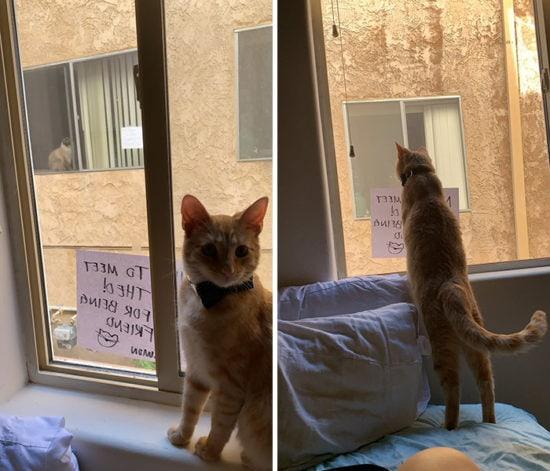 neighbor-cats-falls-in-love-simon-theo