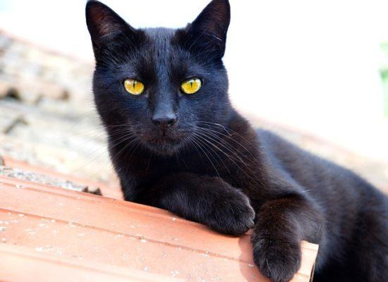 black-cat-appreciation-day