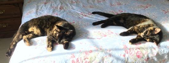 tortoiseshell-cats-sleeping