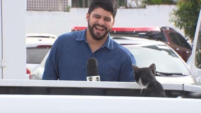reporter-cat-photobomb