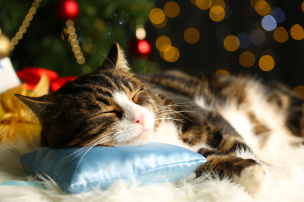 The Night Before Christmas, Feline Style - The Conscious Cat
