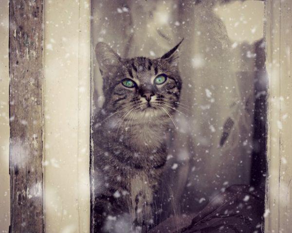 cat-winter-window
