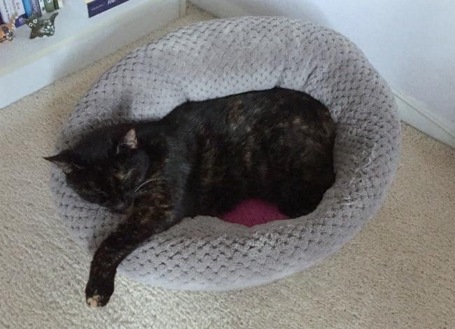cat-sleeping-cat-bed