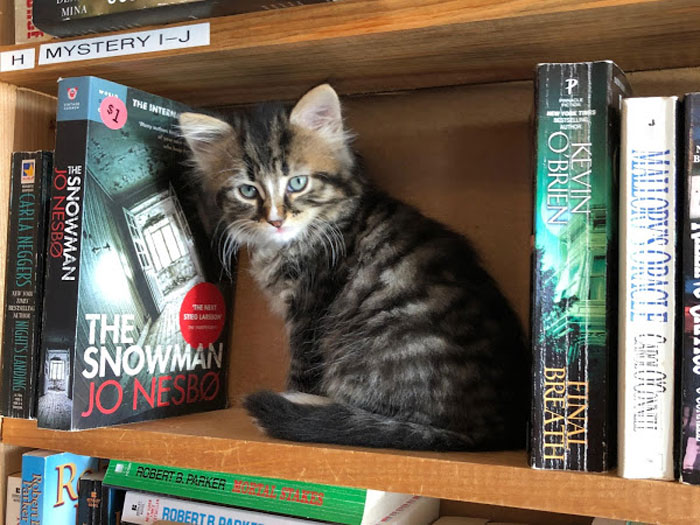 otis-clementines-books-coffee-cats