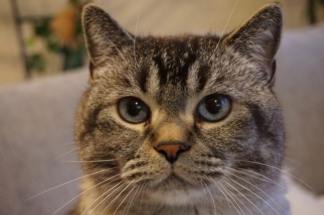 cat-pain-face