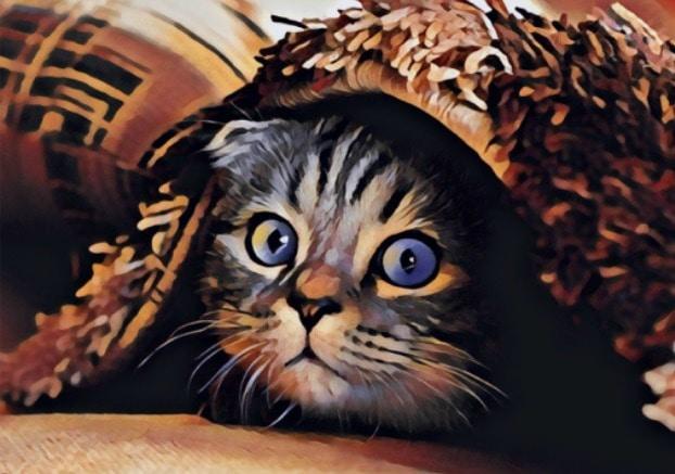 cat-chronic-pain-survey