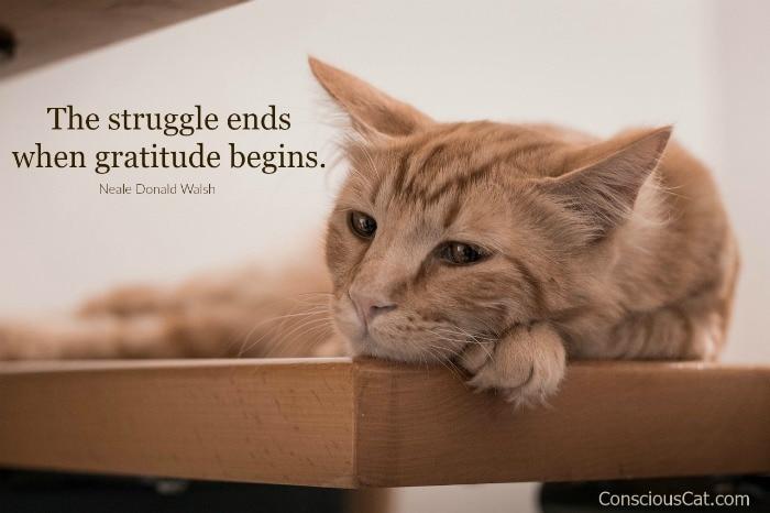 gratitude-pandemic-cat.jpg