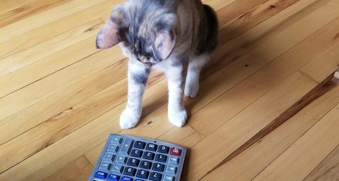cat-calculator