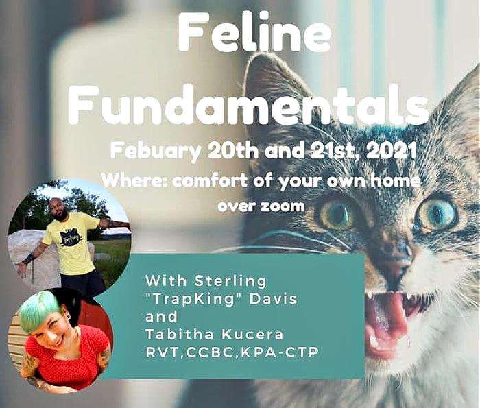 feline-fundamentals