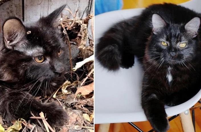 cat-leaves-rescue