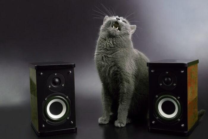 gray-cat-stereo-speakers